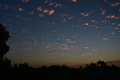 Spots (Images by Jeff - from the sea) Tags: nikon d7200 dusk trees twilight tamron sunset clouds pink pinksunset palmtrees tamronsp2470mmf28divcusd bluesky bundaberg queensland australia 2016 september 500v20f