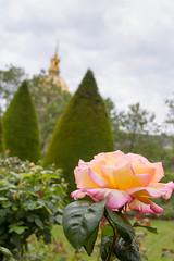 Rodin Museum Garden (bygeorge) Tags: france paris museerodin rodinmuseum gardens flowers