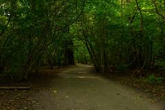 SLN_1607433 (zamon69) Tags: blad gångstig leaf löv pathway tree träd eslöv skåne sweden se
