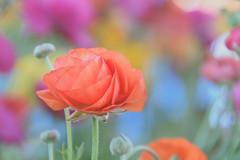 Flower (tonyg1494) Tags: sydney photography flower