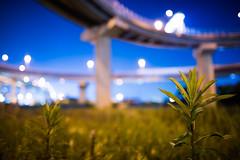 Weed (ogizooo) Tags: weed nikon nightphoto d600 sigma24mmf14dghsm sigma24mmf14art