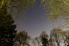 Starry forest (Bas Witkop) Tags: longexposure trees sky tree nature netherlands night forest canon dark stars long exposure space