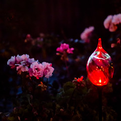 D2910E7 - Garden LED - Red (Bob f1.4) Tags: california ca pink light red roses color garden that bay solar with time dusk led change discovery powered