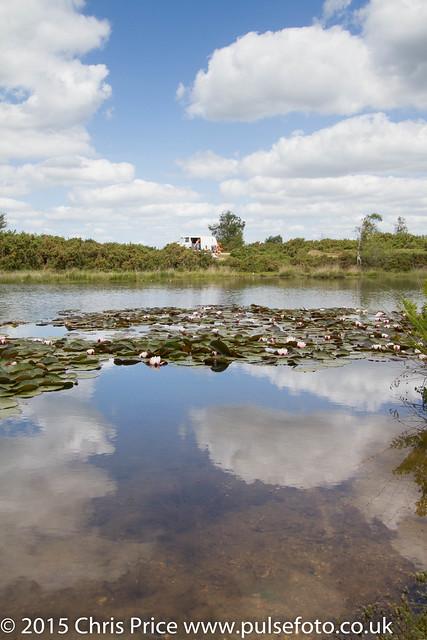 Hatchet Moor, New Forest