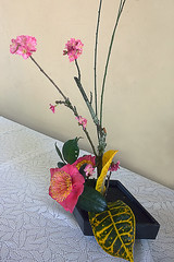 Ikebana (arranjos florais) (Natal Forcelli) Tags: brazil festival brasil sopaulo feira sp japo oriental brasileiro campinas cultural nipo instituto brzil culturajaponesa forcelli brasiljapo natalforcelli