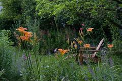 ckuchem-0786 (christine_kuchem) Tags: apfelbaum garten gartenstuhl gras holzsessel naturgarten privatgarten rasen ruhe ruheplatz sessel sitzplatz sommer sommerblumen sommergarten taglilien ausruhen gartenmbel geniesen lesen naturnah natrlich schlafen