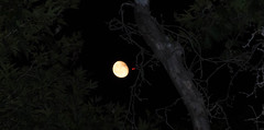 (Psinthos.Net) Tags:  psinthos july summer     night moon luna     sky planetree   tree treebranches   leaves redlight   antennas treetrunk      vrisi vrisiarea vrisipsinthos  fullmoon