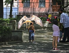 Christo swooping through the park (Goggla) Tags: nyc new york manhattan east village tompkins square park urban wildlife bird raptor red tail hawk adult male christo molt molting goglog