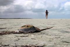 Sea wreck (dsotg) Tags: holbox quintana roo mexico quintanaroo isla island holboxisland islaholbox caribbean caribe sea beach