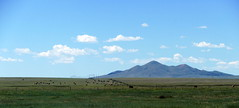 New Mexico (alexandre.malbecq) Tags: mountain montagne cows vaches new mexico nouveau mexique plaines fields vastness usa america