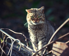 Street cat 157 (Yalitas) Tags: pet cats cat canon kat feline chat kitty gato felino katze katzen kot kedi kass gatta streetcat kotka  kocka  katte  katzchen kottur