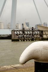 Erasmusbrug Rotterdam (cerfon) Tags: rotterdam nederland