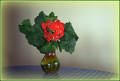 Composition with Green (Irina Kiseleva) Tags: vase flower composition color green red blue table reflection repetition photoborder 1001nights 1001nightsmagiccity