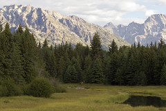 Mountains Meadows and Elk (nicoangleys) Tags: tetons grandtetonsnp nationalpark wyoming jacksonhole schwabacherslanding