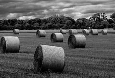 bale of straw (Danyel B. Photography) Tags: bale straw strohballen stroh bauern landwirt feld field peasant bw sw black white schwarz weis august sony vivitar 135mm 28 close focusing