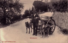 MILK CART (old school paul) Tags: vintage postcard dogcart milkcart milkman