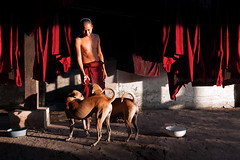 Light. Yangon, Myanmar (Marji Lang Photography) Tags: asia asian asianethnicity buddhism buddhist buddhistmonastery buddhistmonks buddhisttemple burma burmese colorphotography marjilang myanma myanmar rangoon travel traveldestinations travelimage travelphotography yangon animals beautifullight bowls buddhistmonk colorimage colorful colors composition contrast documentary dogs dryinglinen friendly friends goldenhour goldenlight highcontrast home horizontal kindness light lightandshadow man manwithdogs monastery monk oneperson people peopleofmyanmar pets photography playing red shadow straydogs streetdogs tourism travelinburma typical visitmyanmar