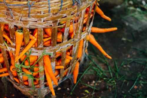 Basket of Carrots, Pasar Keputran Market Surabaya