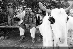 Life (Amna Yaseen) Tags: goats tribalwoman mithri sindh pakistan 2016 tradition lifestyle travel travelphotography culture