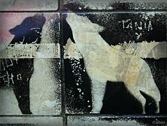 Lobos en Castrelos (Franco DAlbao) Tags: francodalbao dalbao fuji azulejos tiles lobos wolves mural vandalismo vandalism castrelos parque park pintura painting artistas artists gamberros troublemakers grfico graphic