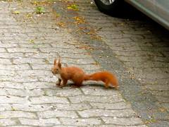 Parkplatzinhaber (radochla.wolfgang) Tags: gesehen gropiusstadt