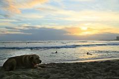 06012015_012_ (ALOHA de HAWAII) Tags: hawaii oahu bigdog waikikisunset