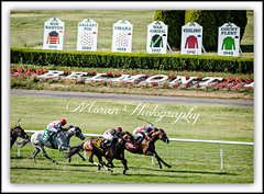 Divisidero (Outside) catches Takeover Target (EASY GOER) Tags: park horses horse ny newyork sports race canon track belmont running racing 5d athletes races 56 thoroughbred equine thoroughbreds 400mm markiii