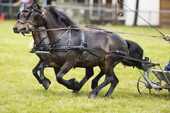Kent_County_Show_2014_Highlights_058