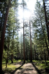 Great Northwest (Marty McLain) Tags: light shadow sun tree forest washington winthrop