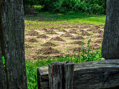 farming the old fashioned way (-gregg-) Tags: st marys city maryland farming fence trees grass