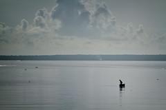 Pesca en Matanzas (Jose Hernandez Ojeda) Tags: cuba travel lahabana matanzas canon canond7 landscape tour turismo pesca pescador mar