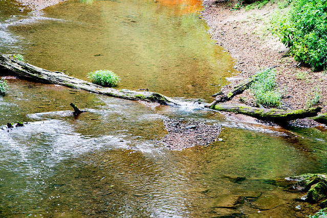Little Blue River - Hoosier National Forest - Bogard Creek - July 27, 2016