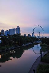 Reflections (elenaleong) Tags: pond gardencity singaporeflyer bigwheel reflections dusk skyline