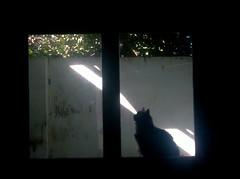 gato lser (Mara SoL Rodrguez) Tags: window ventana casa interior silouette gato silueta cay da mascota
