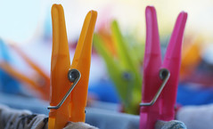 Pretty pegs (judith511) Tags: clothespegs clothespins colourful washing newsoftheweird