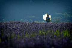 Lavender Girl (Cornelli2010) Tags: people france nature girl field backlight frankreich candid natur chinese feld lavender backlit provence frau mdchen gegenlicht sault lavendel canonef70200mm14l canoneos5dmarkiii