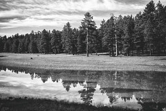 Reflections in Monsoon Waters (greenschist) Tags: arizona blackwhite coconinocounty schneblyhillroad usa forest reflections water