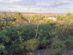 Sunset on the hill (EllenJo) Tags: pentaxqs1 pentax july27 2016 ellenjo ellenjoroberts