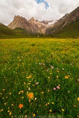 Summer Paradise (Jaykhuang) Tags: wildflowers nianbaoyuze tibetanplateau china qinghai snowmountains bayanharmountains clouds mountains meadows summer 2015 青海 年宝玉则 青藏高原 中国 野花 grassland