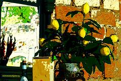 STILL LIFE. (Viktor Manuel 990) Tags: stilllife naturalezamuerta flowers flores painting pintura digitalart artedigital quertaro mxico victormanuelgmezg