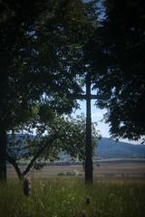 In diesem Zeichen (gripspix (Catching up!)) Tags: 20160807 nature natur trees bäume kruzifix crucifix holgalensforcanon plastiklinse badlens vignettierung