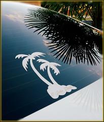 palmy reflections... (Baja Juan) Tags: palm tree reflections rear window mercedes benz sanantonio texas baja