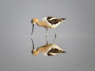 Mirror, Mirror - Take 2