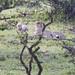 Y1A1643 Olarro, Kenya