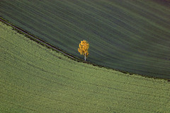 A Single Birch Tree (Aerial Photography) Tags: tree field by landscape mood landwirtschaft feld birch agriculture cereals landschaft baum deu stimmung feldweg birke leaftree keh abendlicht getreide bayernbavaria deutschlandgermany ndb laubbaum deciduoustree ackerbau foliagetree 02062002 rohrinb d6003038 obereulenbach rohrinblkrkelheim