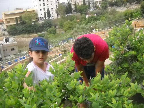 Lia & Jad picking Blueberries bb May 28, 2015