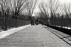 Bridge crossing (vinnie saxon) Tags: bridge people blackandwhite nature monochrome daylight walk montreal fujifilm iledelavisitation