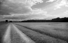 (salparadise666) Tags: bw analog germany nikon natur wolken sigma hannover nils apx100 24mm fe agfa region landschaft rs blackdiamond caffenol volkmer