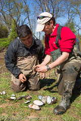 Anacostia 4-13-16-5751 (Anacostia Watershed Society) Tags: urban river nationalpark nps wildlife watershed krista mussel kenilworth wetland anacostia kennilworthaquaticgarden watershedwildlife schlyer