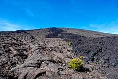 Scarce plants among dried lava (clemfalc14) Tags: pitondelafournaise driedlava scarceplants nosignsoflife